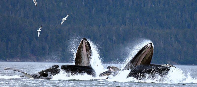 Alaska-PONANT