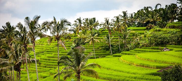 Croisiere Bali